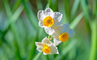 庭のお花でコーデして、いつもそばで語りあっています